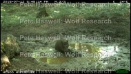 wb_wallow [PHWR]