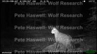 Wildcat_IMG_0052 [PHWR]