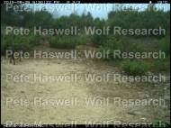 wolf hide & seek [PHWR]