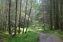 Forest Track nr Singing Sands