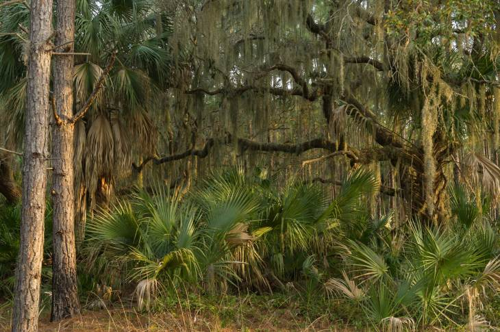 An example of the coastal forest of the Barrier Islands in Georgia, USA. Photo by landscape photographer Pete Oxford.