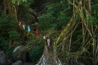 Khasi women line up to cross a living root bridge in Meghalaya India. Photograph by conservation photographer and cultural photographer Pete Oxford.