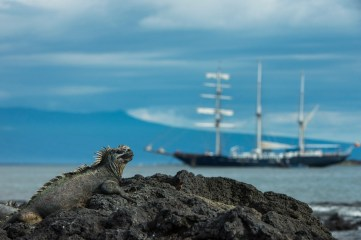 A marine iguana rests on lava rock with a large ship in the background. Photo by travel photographer Pete Oxford.