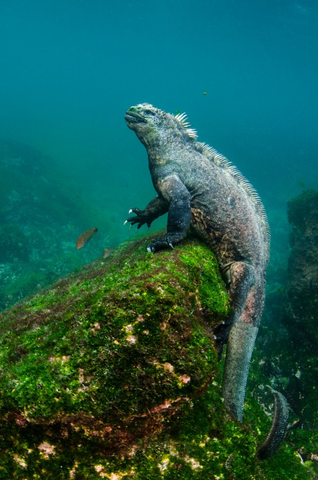 Photography by conservation and underwater photographer Pete Oxford.