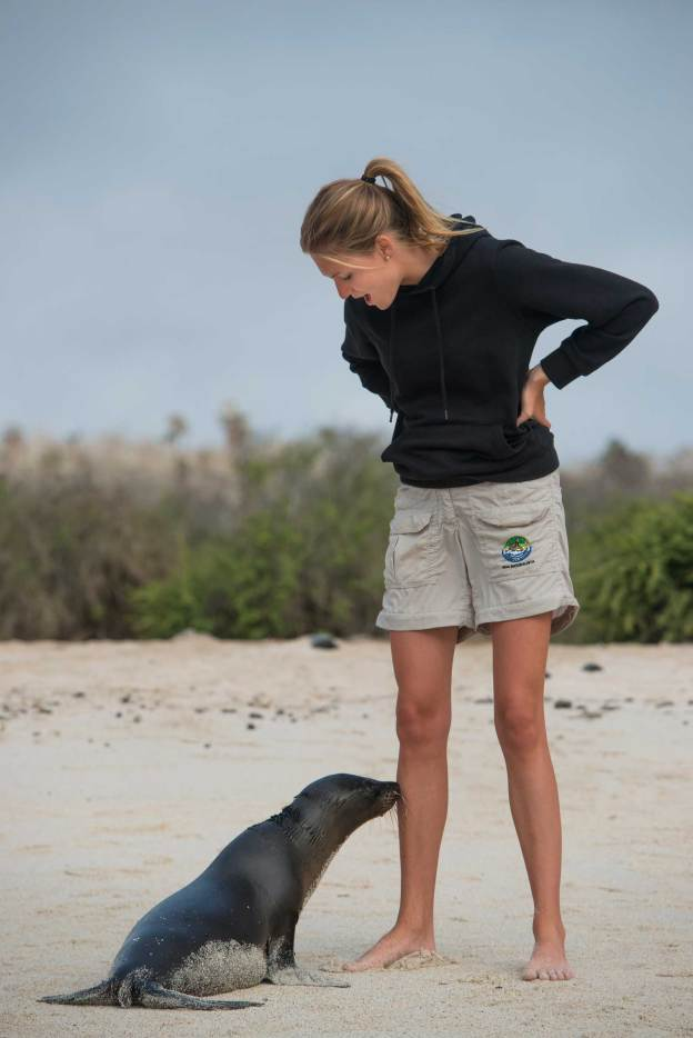 A baby sea lion approaches a tourist on a white sand beach in the Galapagos Islands. Photograph by conservation and travel photographer Pete Oxford.