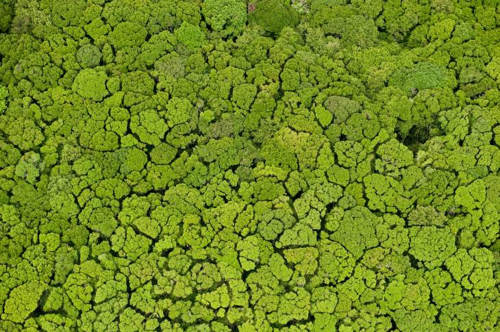 An aerial view of a seemingly endless rainforest is shown. Photo by aerial photographer and conservation photographer Pete Oxford.