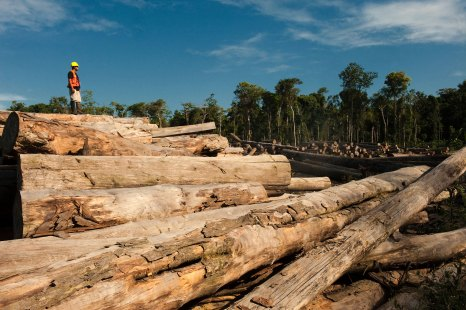 A logging operation is shown with a man standing on top of a large pile of trees. Photo by conservation photographer Pete Oxford.