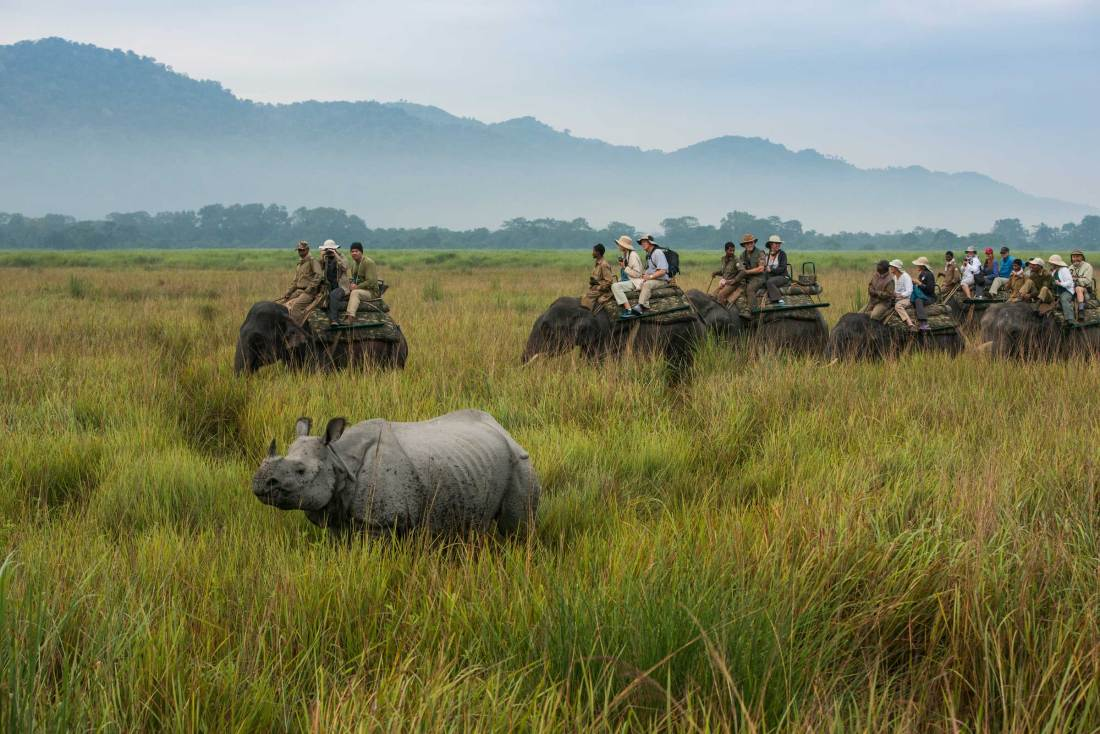 Tourists ride elephants as they go looking for wildlife.