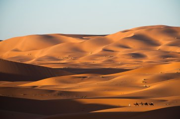 Large sand dunes are shown in warm light with a group of camels and rider in the foreground. Photograph by landscape photographer Pete Oxford.