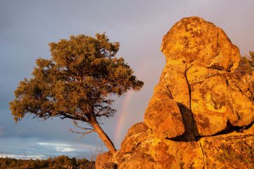 A tree and large rock are shown with a rainbow int he background. Photo by landscape photographer Pete Oxford.