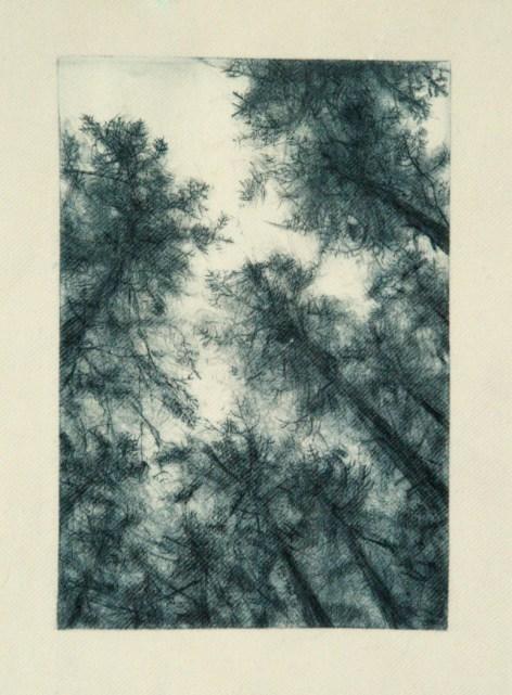 sitka grove printed on fabric