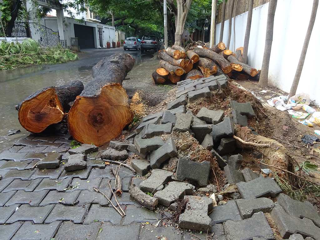 Chennai Rising – What Happened After the Floods