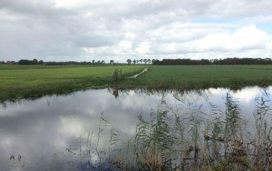 Nederland – Toekomst veenweiden