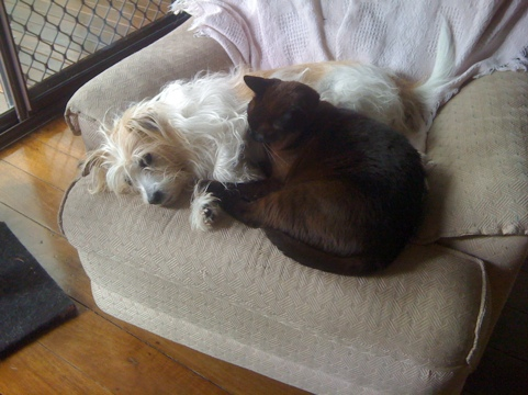 Our cute dog and cat