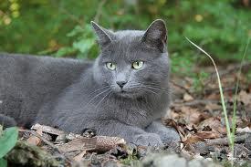Cranston the Cat