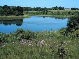 Meadow - pond