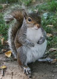 Sedgwick the Squirrel