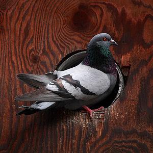 Pigeon/Hole