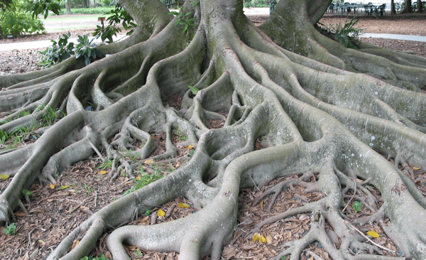 Roots [see Acknowledgements for Image Credit]
