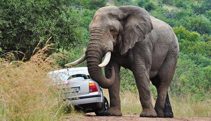 Bad Elephant!