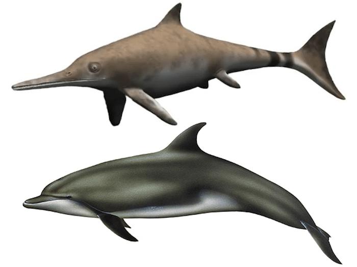 Ichthyosaur and Dolphin