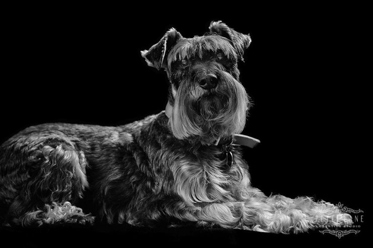 Pet photographer London