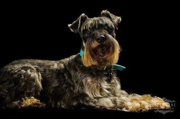 Pet photographer London - dog posing
