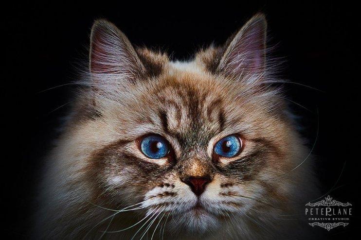 Pet photographer London - cats