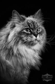 Pet photographer London