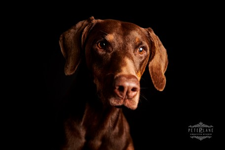 Pet photographer London - pet photographer