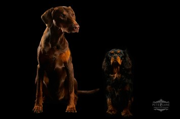 Dog photographer London - 2 dogs