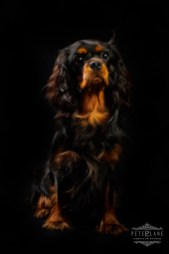 Pet photographer London - cute dog