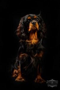 Pet photographer London - cute dog
