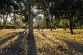 Parklands Cyclist