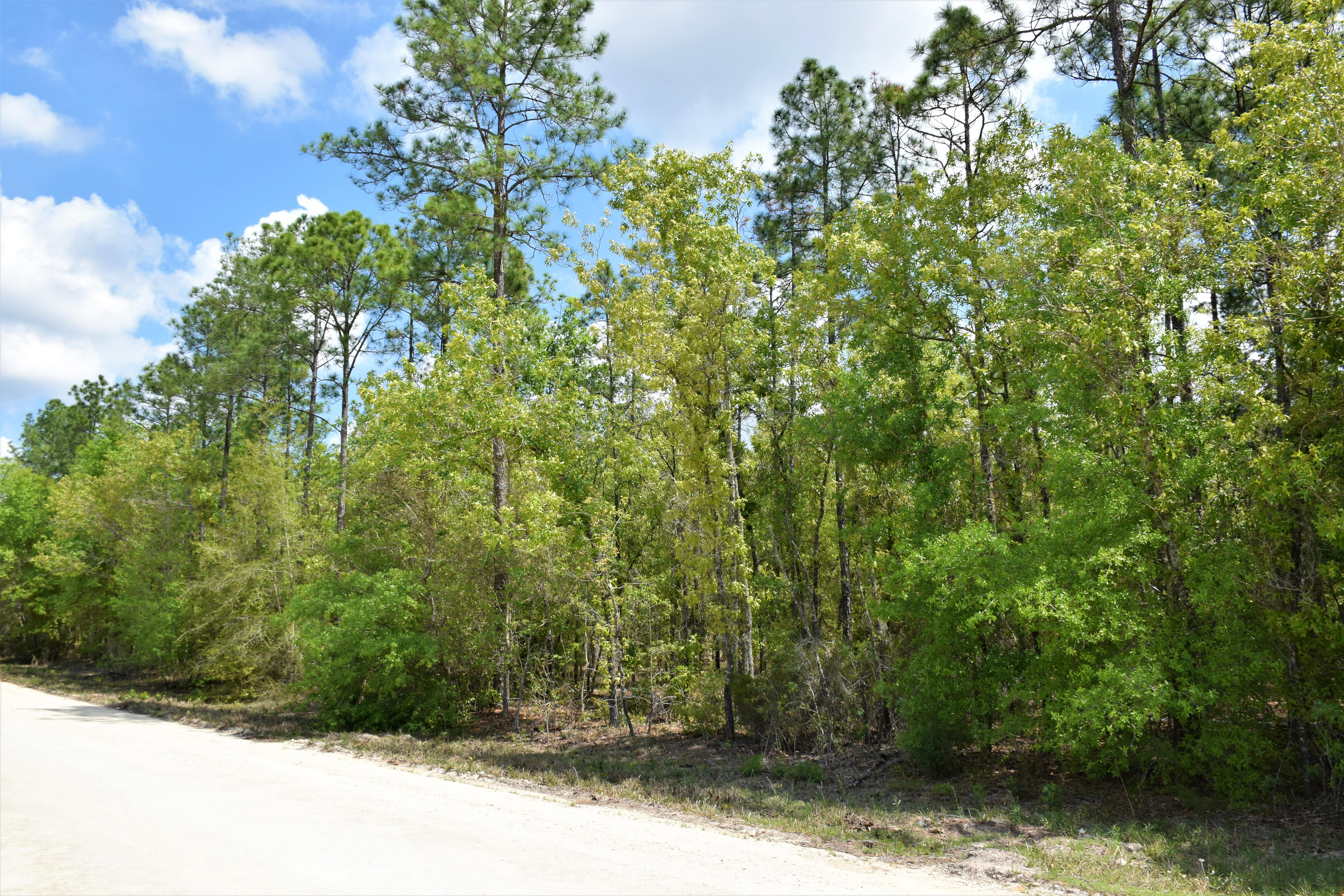 Williston, Levy County, North Central, FL Land For Sale