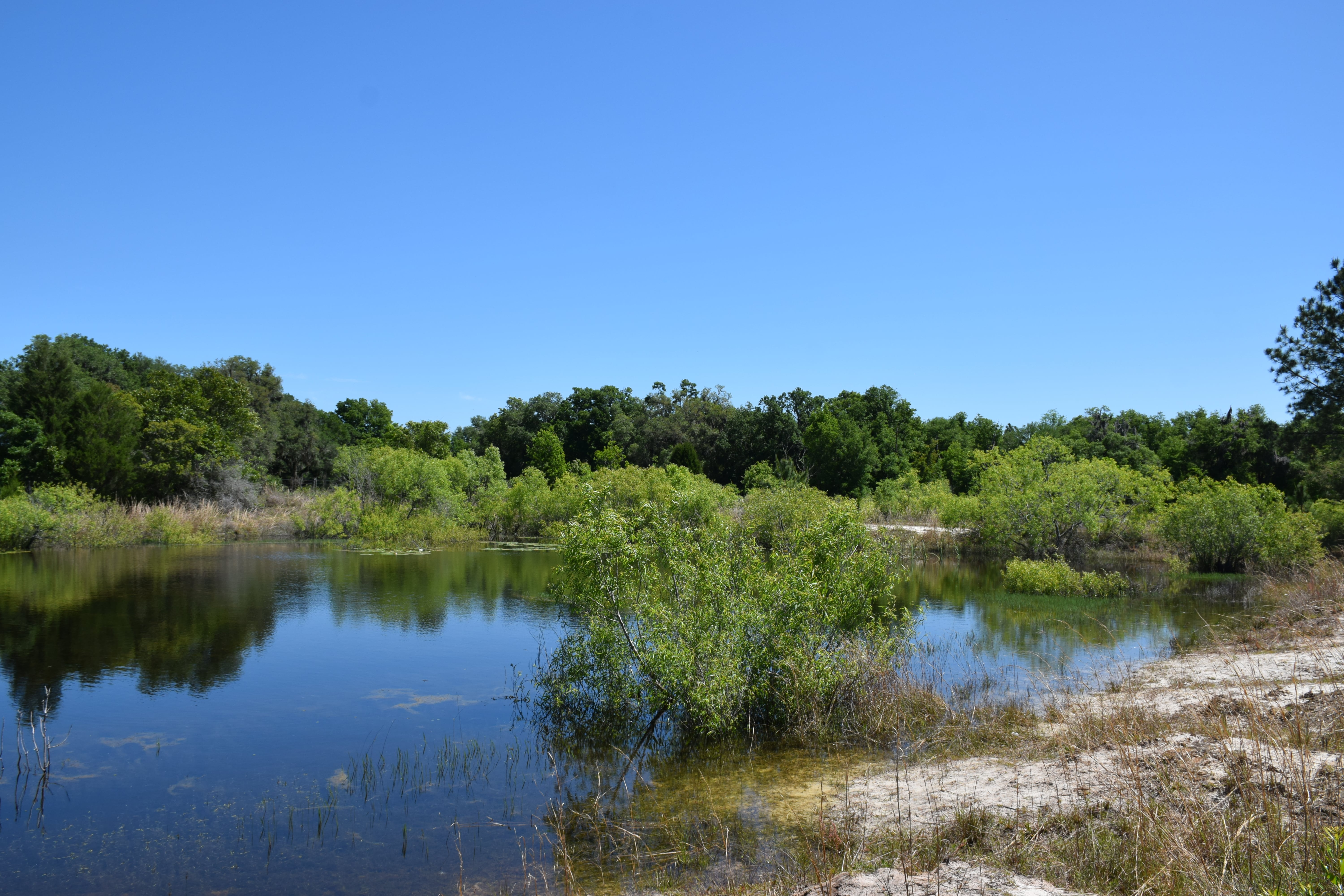 Cross City, Dixie County, North Central, FL Land For Sale – 6 Acres