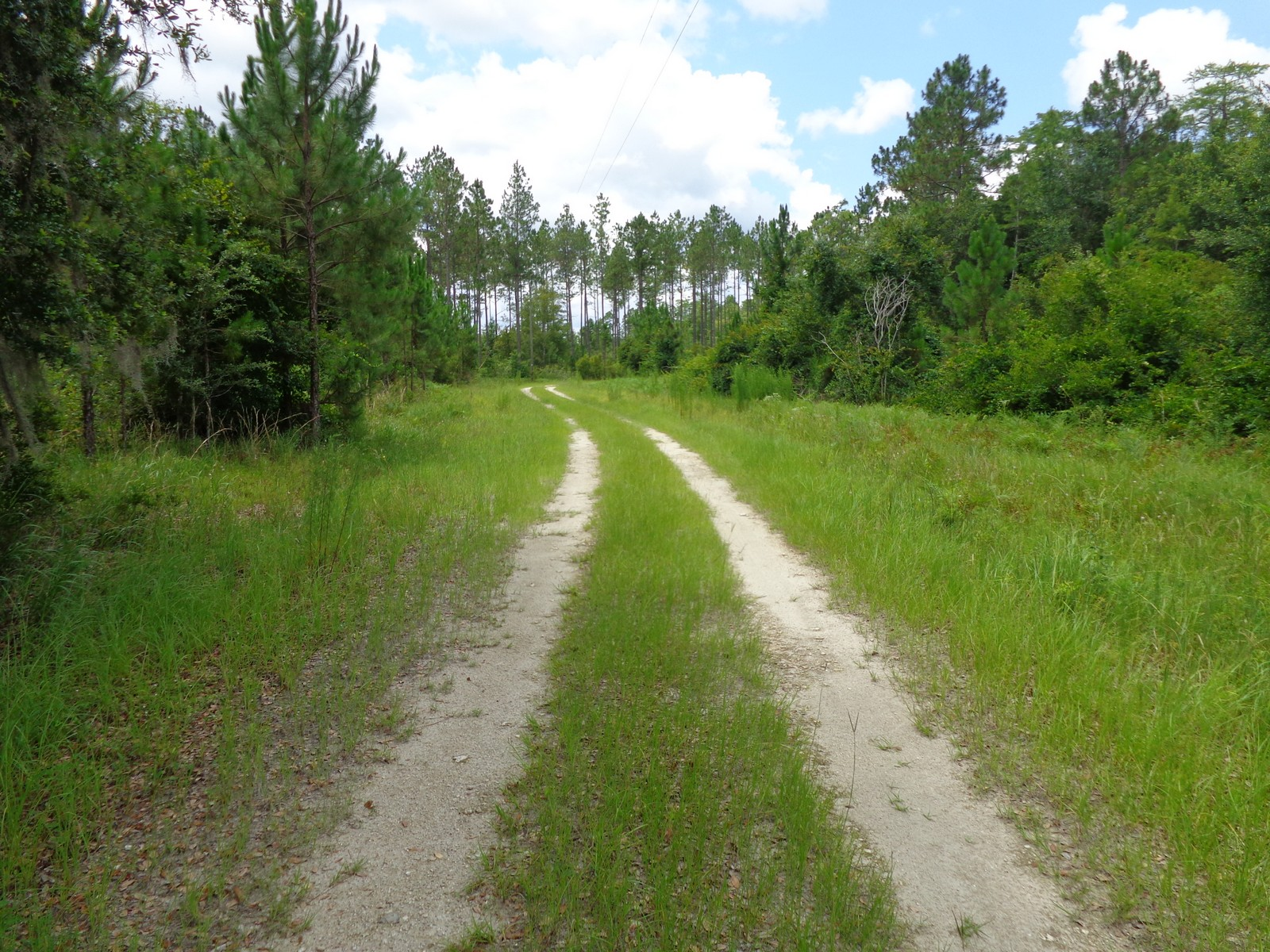 Perry Taylor County, FL Land For Sale 17 3 Acres