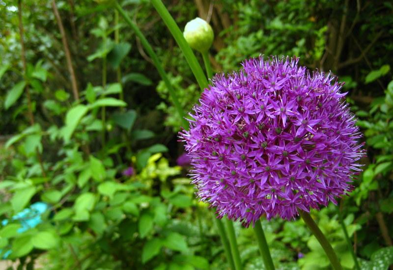 Southampton Quaker's Garden