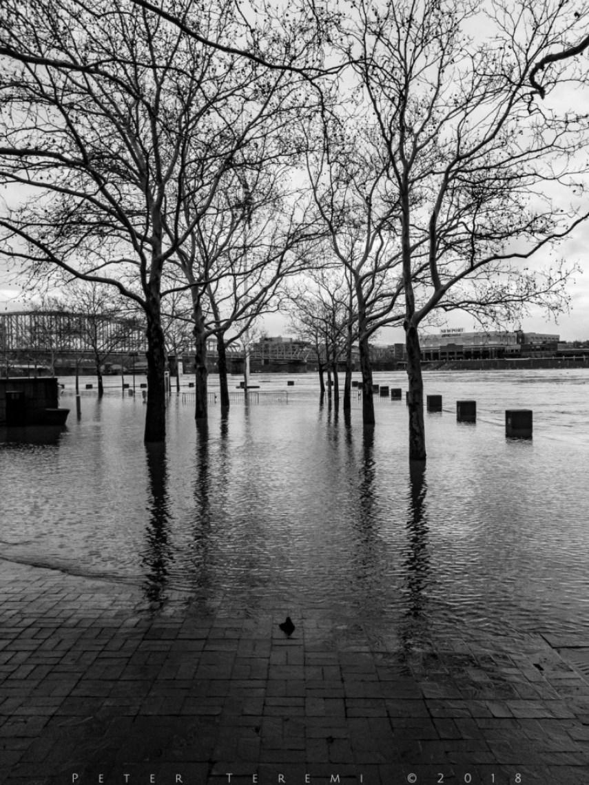 Flood Fest