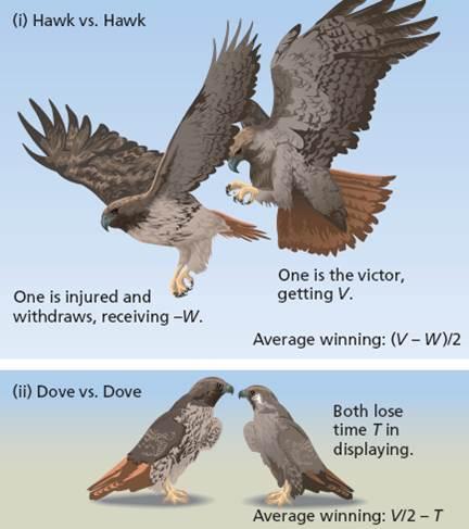 Hawk_Dove