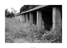 Nikon D90_29012__DSC0286-border