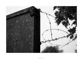 Nikon D90_29041__DSC0316-border