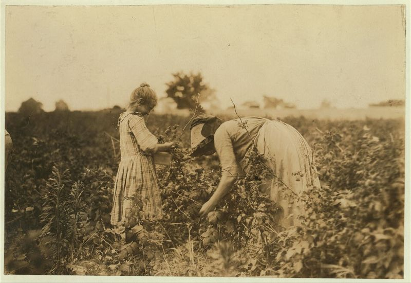 """Mary, a Polish girl and her mother, picking berries on Bottomley Farm, Rock Creek, near Baltimore, Md. In the winter they go to Dunbar, La., for oyster shucking."", 1909 - Lewis Hine - <i>Library of Congress</i>"