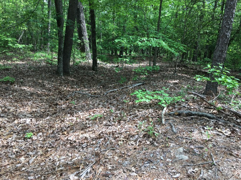 Remnants of trenches built at Bentonville by Union engineers from Michigan. - <i>Photo by the Author</i>