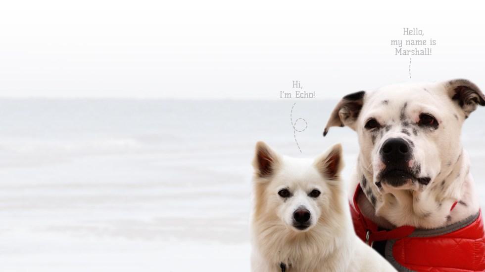 Echo & Marshall Therapy Dogs and Pet Evac Pak Spokesdogs