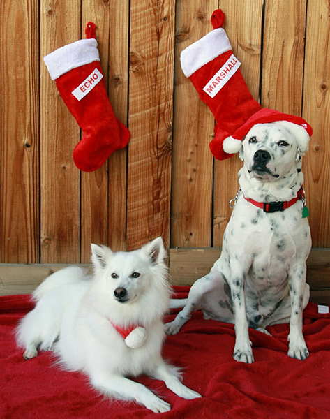 Echo & Marshall Merry Christmas Therapy Dogs
