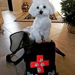 Small Dog Pet Evac Pack