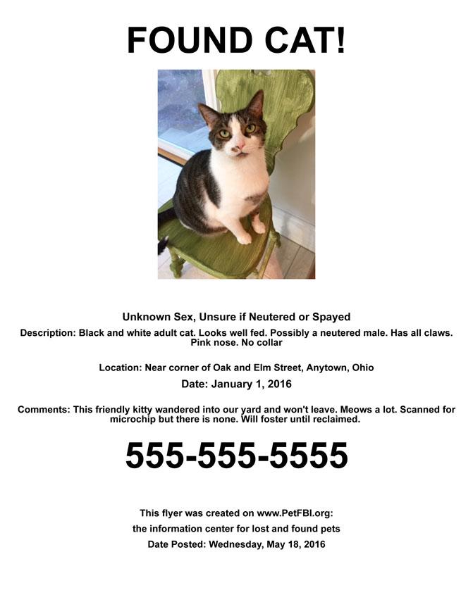 found cat flyer sample pet fbi
