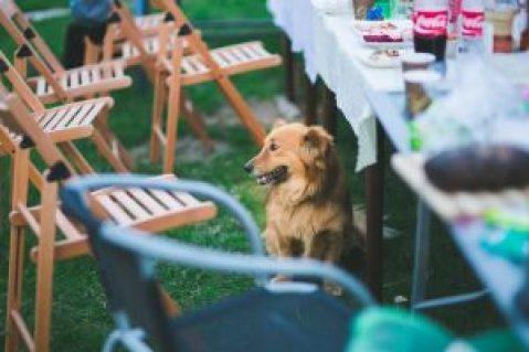 safe human foods dog