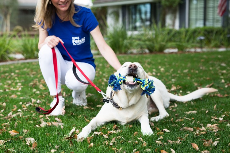 Top 3 Reasons to Choose Fetch! Pet Care as Your Franchise Opportunity